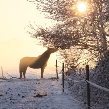 Zimowy miniporadnik żywieniowy dla koni