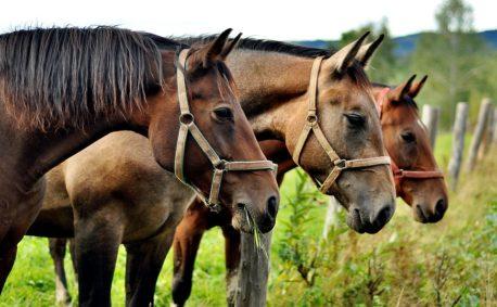 pasza dla koni - włókno