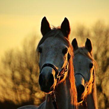 Regulamin zakładki wyprzedaże paszy dla koni