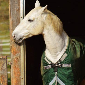 6 wskazówek, dzięki którym rozpoznasz zdrowie u konia!