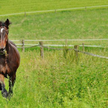 Mesz dla koni w okresach przejściowych