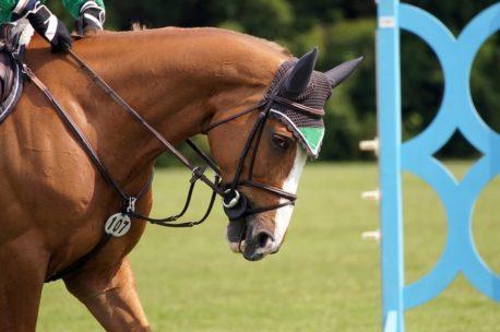 pasza energetyczna dla koni sportowych