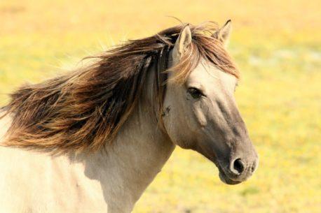 zdrowie konia