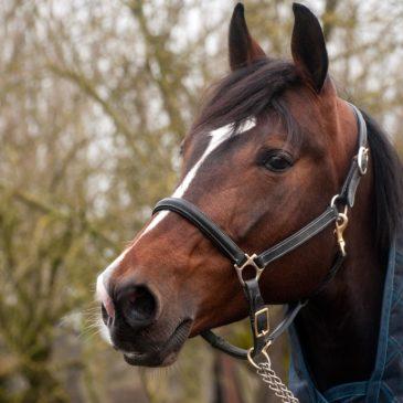 Soja w paszy dla koni