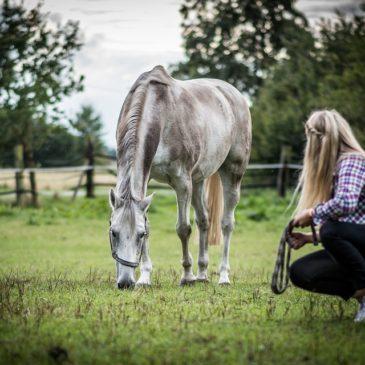 Lucerna dla koni: 5 szybkich wskazówek jak stosować