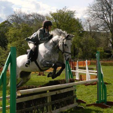 Żywienie konia a jego temperament