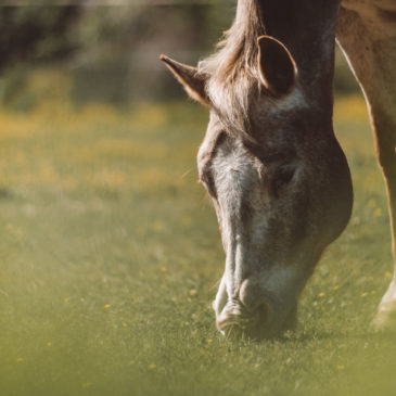 Odstrasz owady razem z Masters Polska pasza dla koni