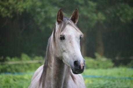 czosnek dla konia
