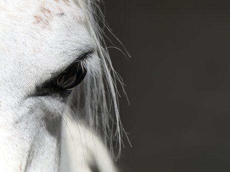 pasza dla koni wrzodowych