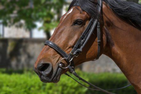 mesz dla konia