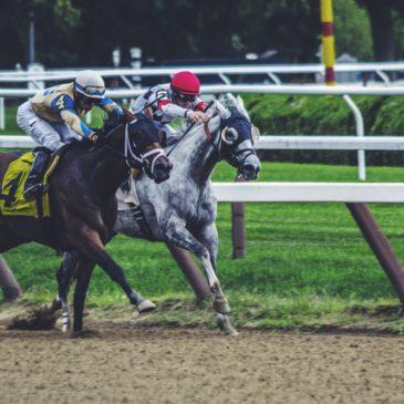 Żywienie koni wyścigowych