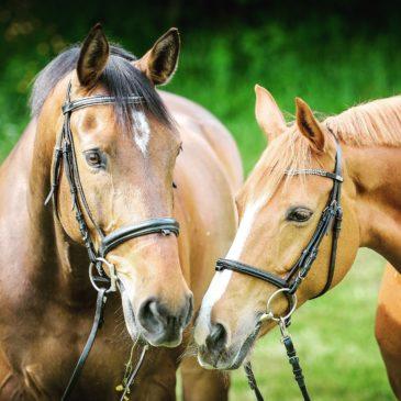 Pasza dla koni sportowych po sezonie otwartym