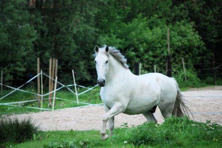 zmiana sierści u koni