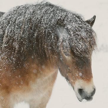 Temperatury w dół… Energia w paszy dla koni w górę!