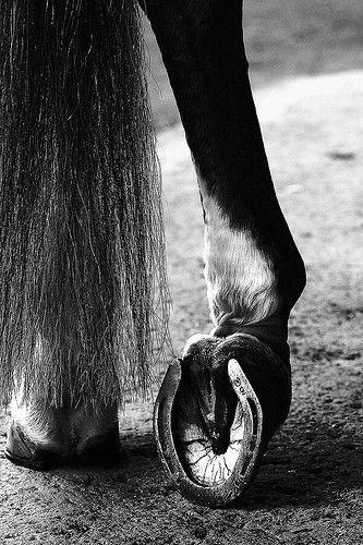 Gnijąca strzałka w kopytach u koni