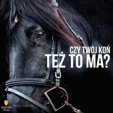 Wrzody u koni leczenie i rozpoznanie objawów