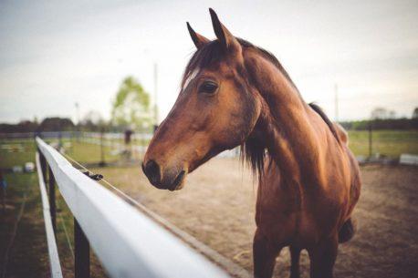 gruda u konia