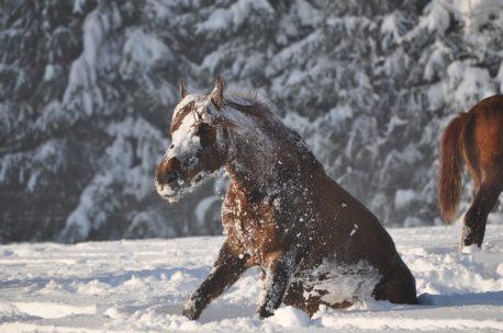 pasza energetyczna dla koni