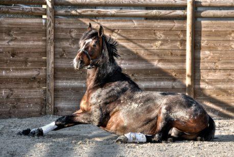 lizawka dla koni