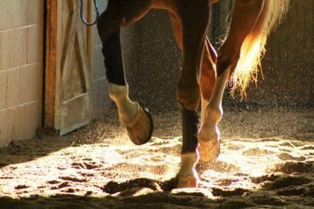 pasza dla koni na kopyta