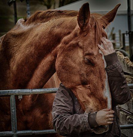 pasza dla koni z tendencją do kolek