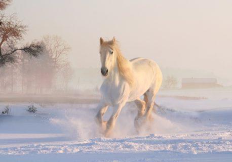 pasza wysokoenergetyczna dla koni