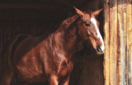 trawokulki dla konia