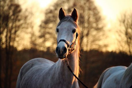 pasza dla koni z copd