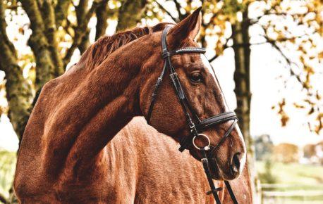 pasza dla koni z ochwatem