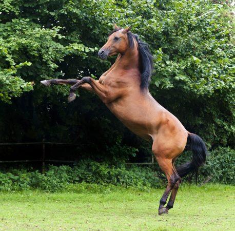 pasza uspokajająca dla koni