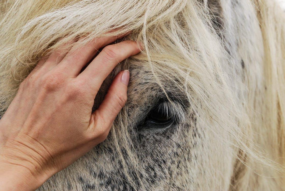 pasza dla koni nerwowych