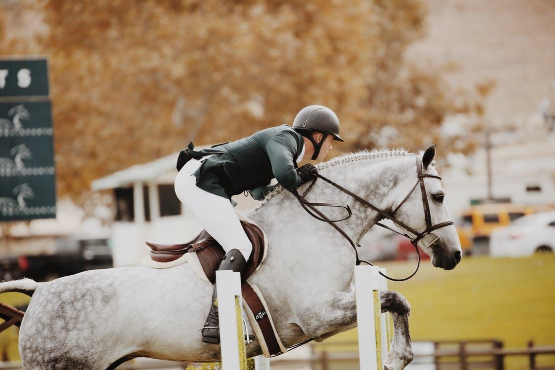 lucerna jako pasza dla koni