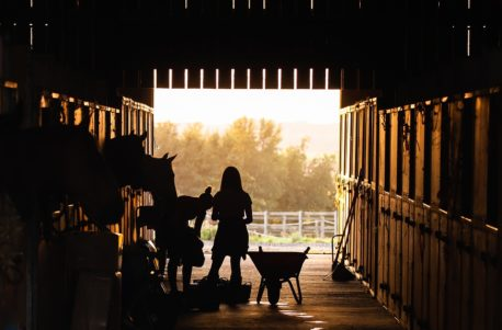 zwyrodnienia stawów u koni