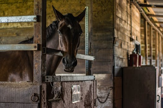 koń pasza musli