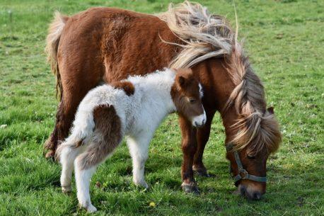 karma dla koni