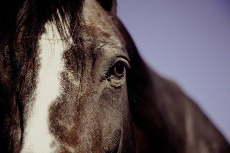 problemy ze skórą u koni