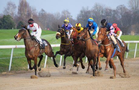 terapia manualna dla koni