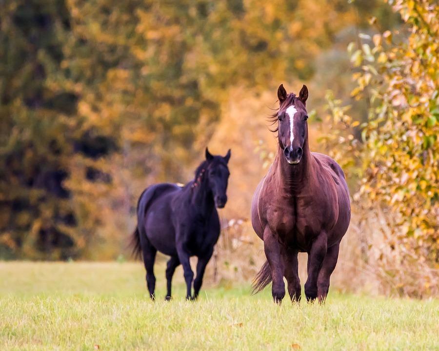 gruda końska jesień koń ma grudę