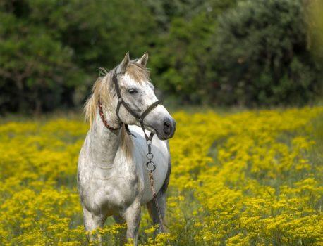jesienna gruda u koni