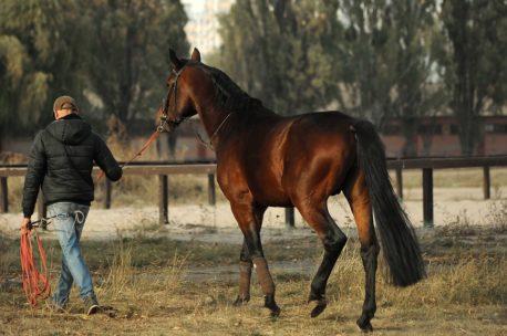 terapia manualna dla koni sportowych