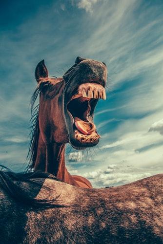 COPD u koni