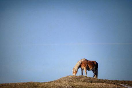 karmienie koni