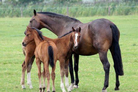 przepisy na mesz dla koni