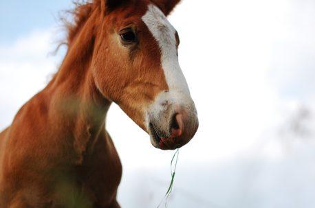 rodzaje pasz dla koni