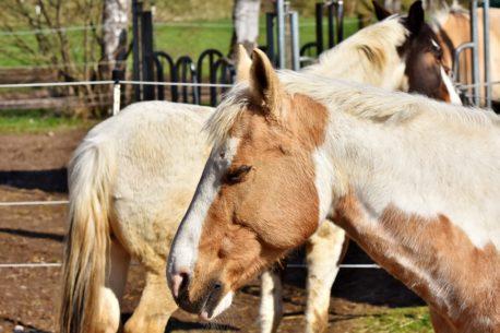 elektrolity dla konia