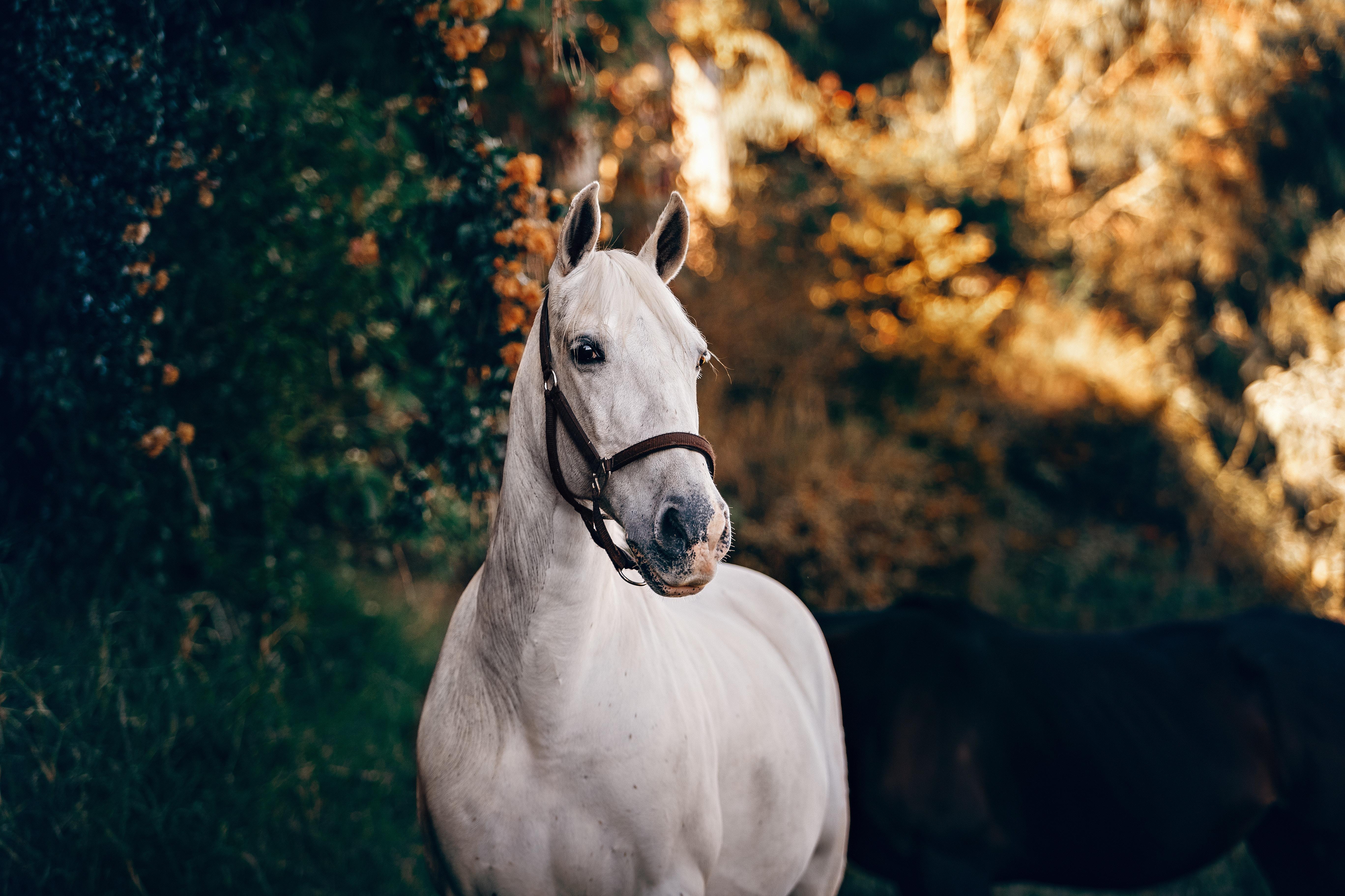 słownik pojęć jeździeckich