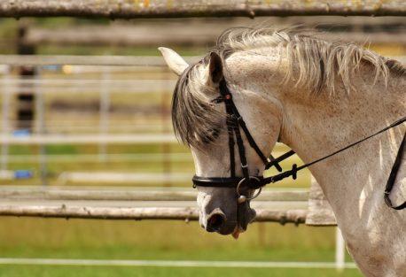 sieczka dla koni