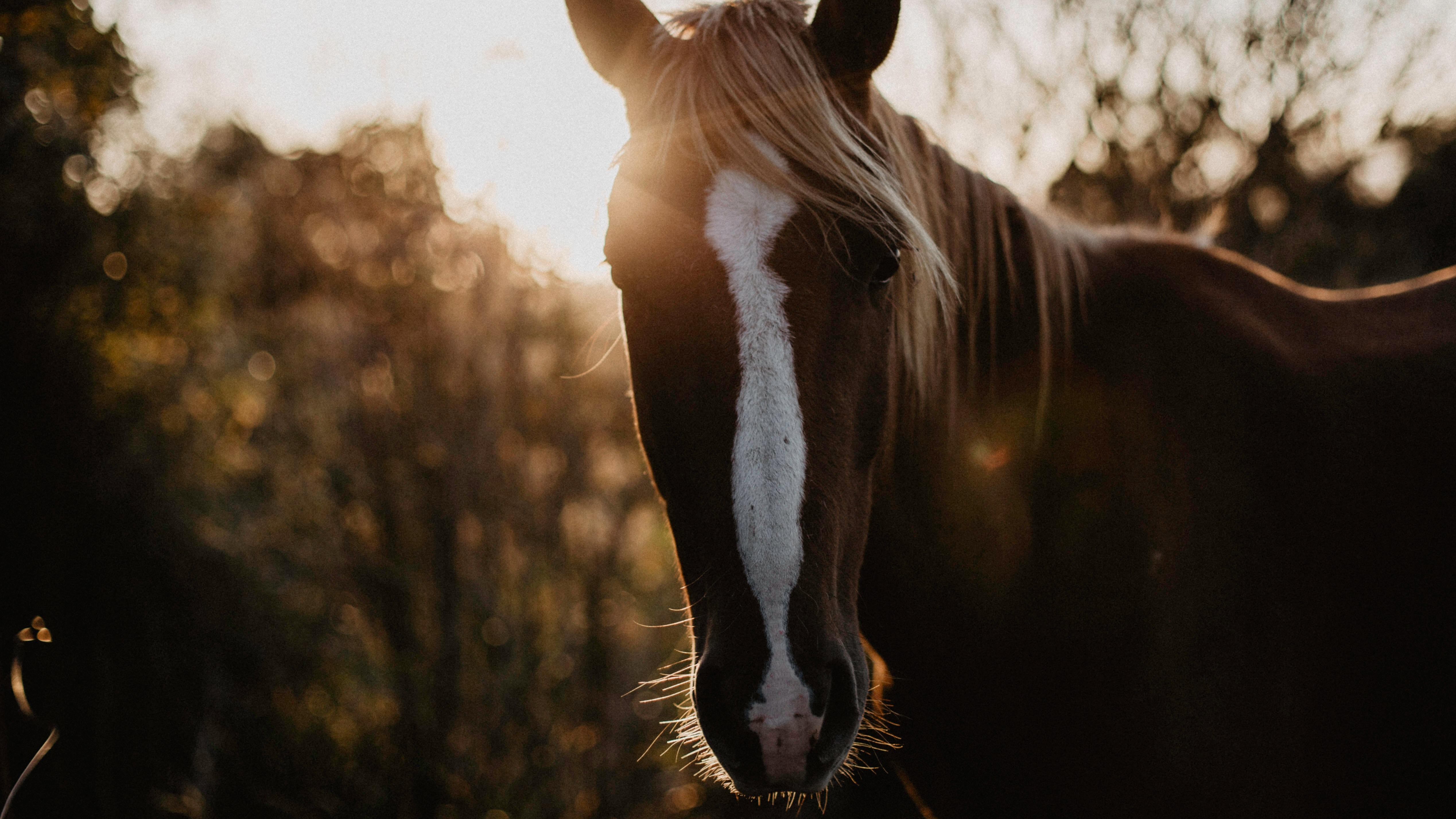 Jak chronić nasze konie przed kleszczami?