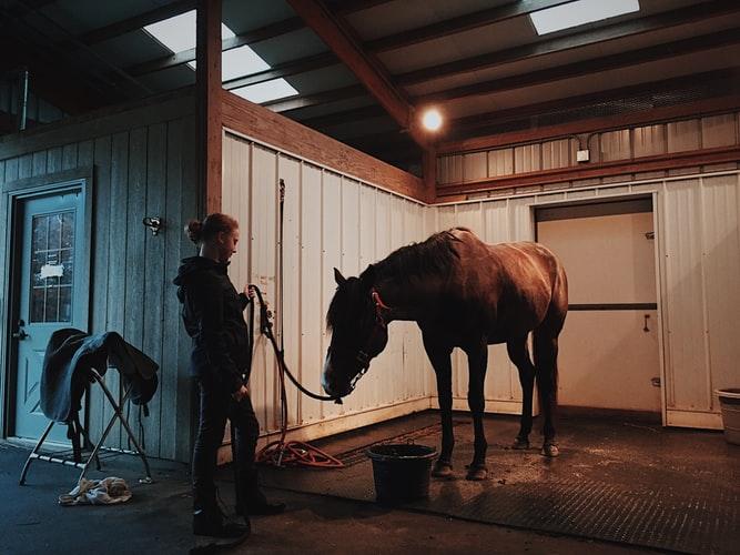 odżywanie koni