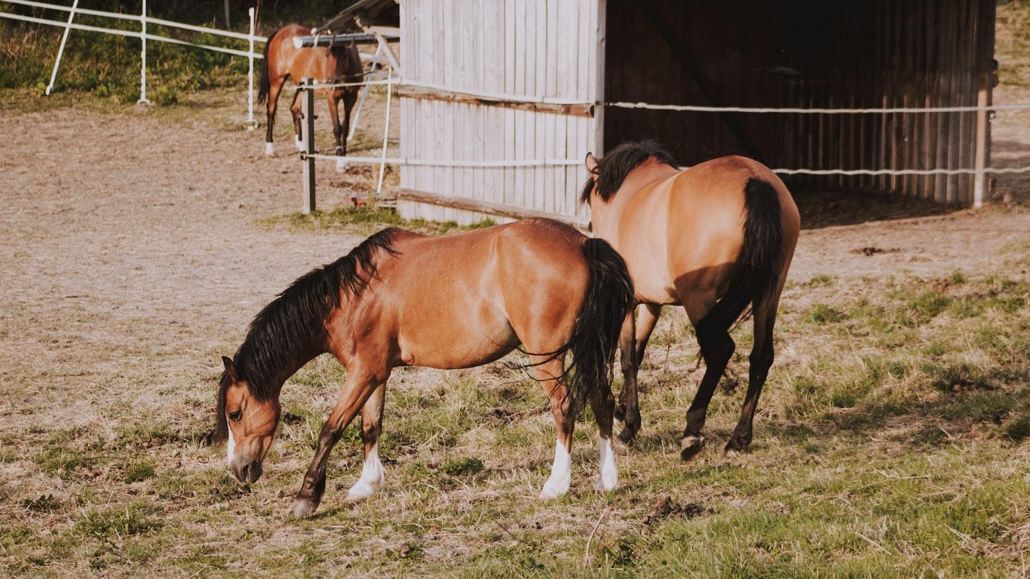 brak apetytu u konia